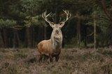 Hert All-in_